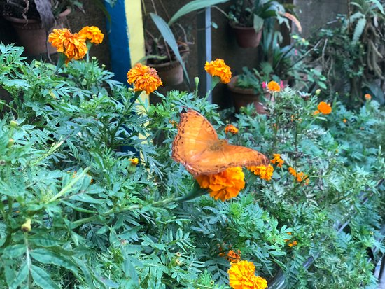 Cameron Highlands Butterfly Garden