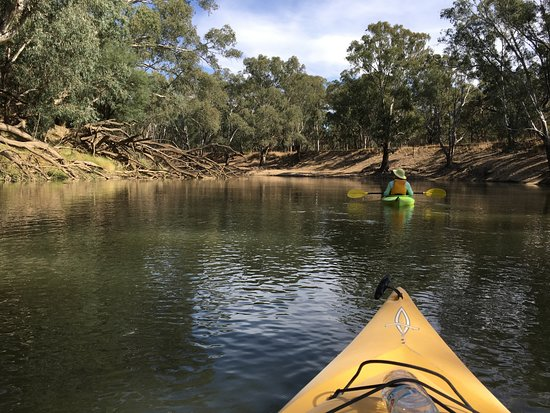 Kyabram, ออสเตรเลีย: If you go very early in the morning, you could see platypuses