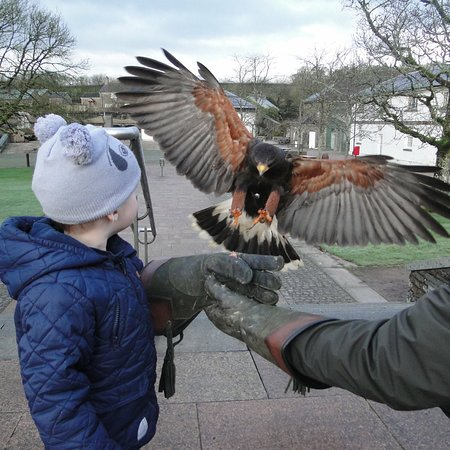 Gales, UK: Pembrokeshire Falconry experience at The National Botanic Garden of Wales (Visit Wales; Best Act