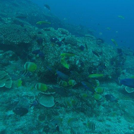 North Stradbroke Island, Australia: photo4.jpg