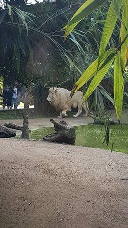 Zoo de La Flèche : 20180422_101640_large.jpg