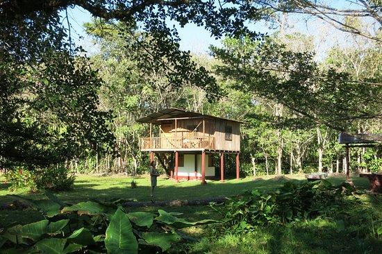 Poptun, Guatemala: Treehouse