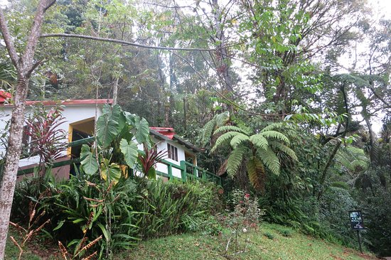Baja Verapaz Department, Guatemala: Hotel room in the middle of the forest. But.... too close to the road