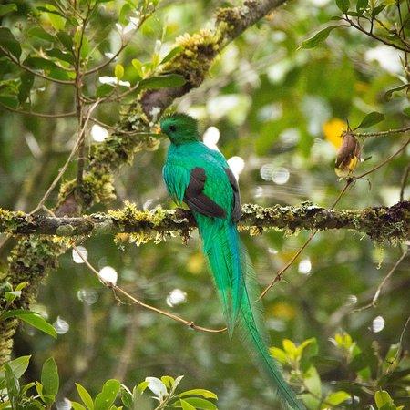 San Gerardo de Dota, Costa Rica: photo6.jpg