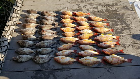 Off The Grid Fishing Charters: almost 50 keepers