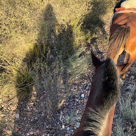 Los Pingos Horse Riding : photo0.jpg