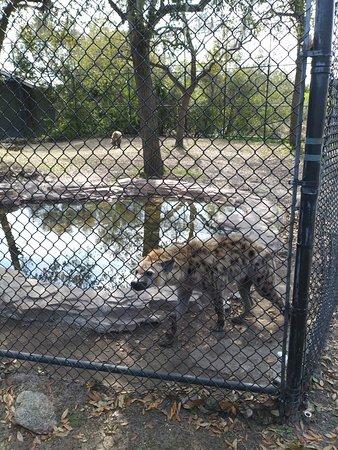 Animal Parks Near Myrtle Beach Sc
