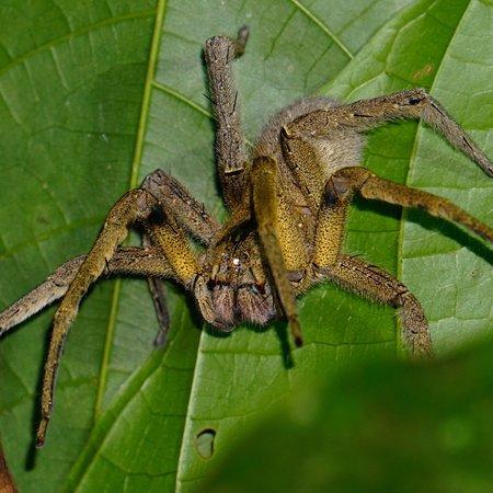 Tarantulas Way: photo0.jpg
