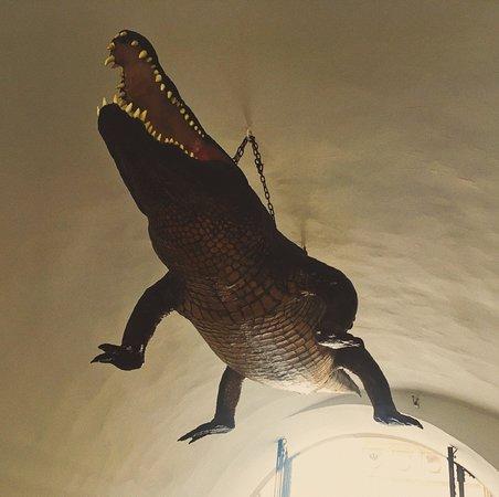 Брно, Чехия: crocodile