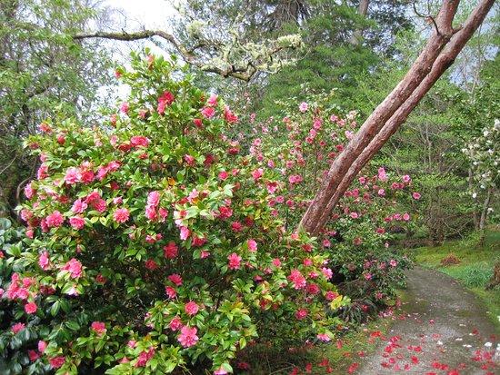 Leckmelm Shrubbery & Arboretum