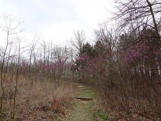 Troy, MO: Turkey Hollow Trail