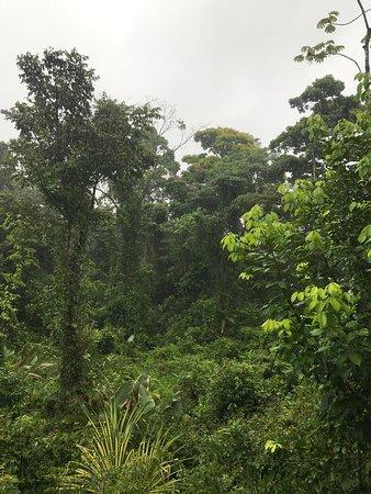 Chachagua, Costa Rica: photo8.jpg