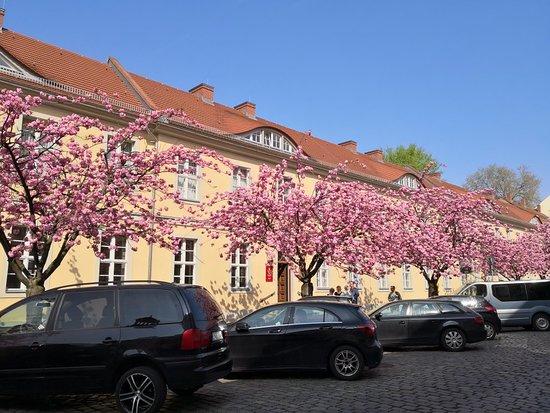 Hotel Am Großen Waisenhaus: IMG_20180421_110042_large.jpg