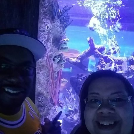 SEA LIFE Orlando Aquarium - 2018 All You Need to Know ...