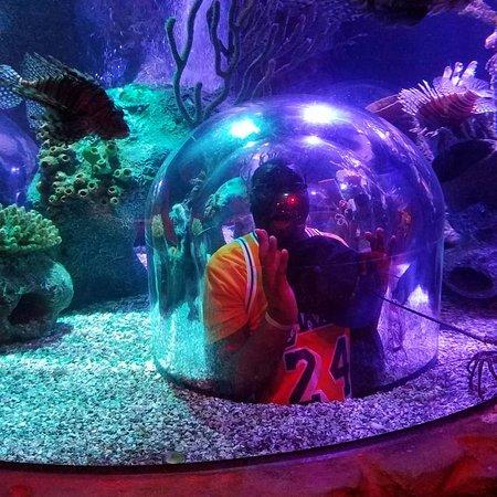 SEA LIFE Orlando Aquarium - 2018 All You Need to Know ...