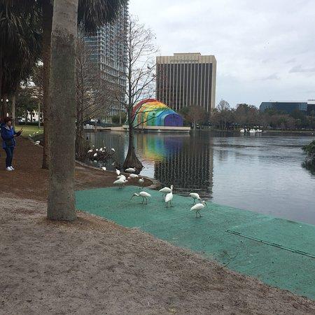Lake Eola Park: photo7.jpg