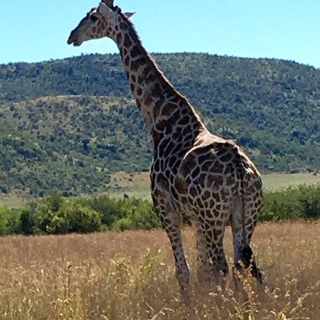 Pilanesberg National Park, Güney Afrika: photo2.jpg