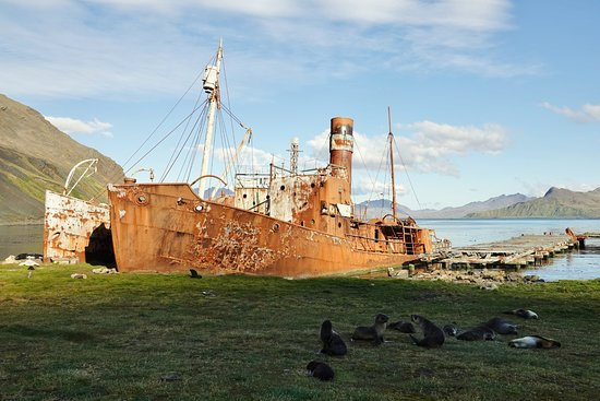 Grytviken照片