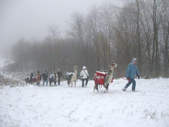 Greeneville, TN: We hike year 'round!