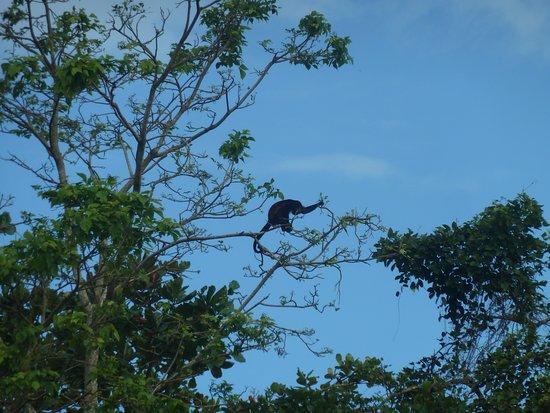 Barra de Pacuare, كوستاريكا: pendant l'excursion des animaux partout