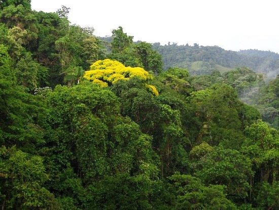 E-Plus Travel & Leisure: Costa Rica Rain-forest