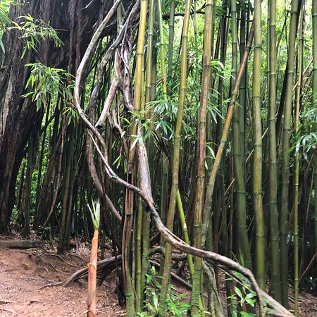 Manoa Falls: photo2.jpg