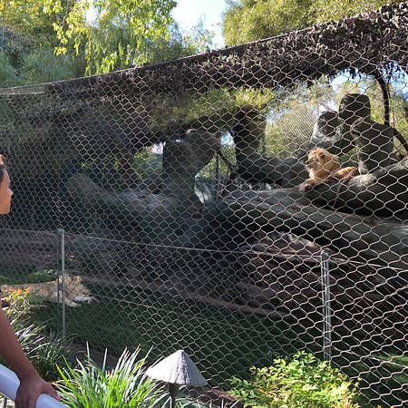 Siegfried Roy 39 S Secret Garden And Dolphin Habitat Las Vegas 2018 All You Need To Know