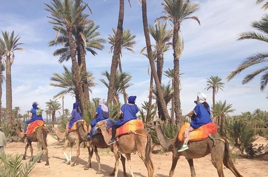 CAMEL RIDE NEAR TO MARRAKECH