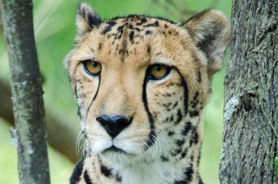The Anne Van Dyk Cheetah Centre