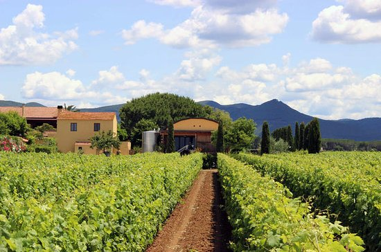Bolgheri: Winery Tour with Wine Tasting in Terre del Marchesato