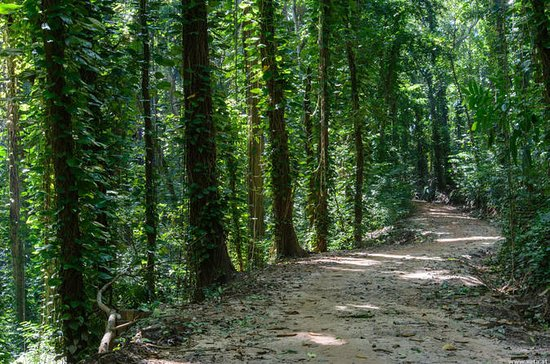 Visite à la forêt d'Udawatte Kele...