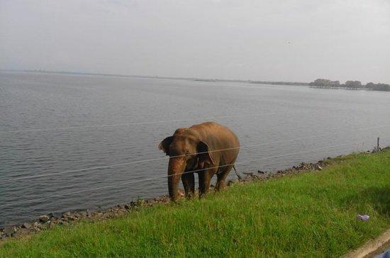 Sri Lanka 11-Day Sightseeing Tour...