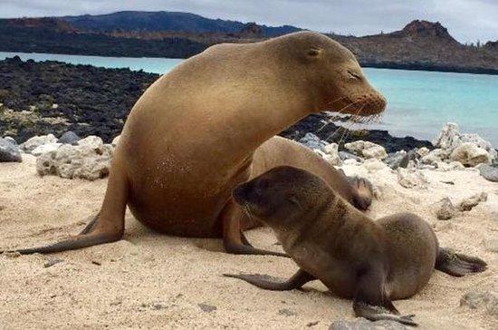 5 Day Galápagos Islands Land Tour