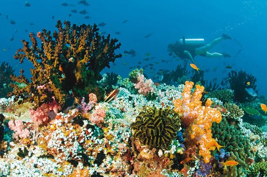Blue Lagoon Dive Combination Heaven...