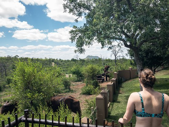 Grietjie Nature Reserve, Южная Африка: Watching elephants from the deck.