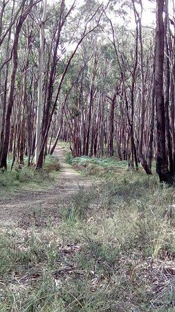 Trentham, Australia: At the start of the old racecourse