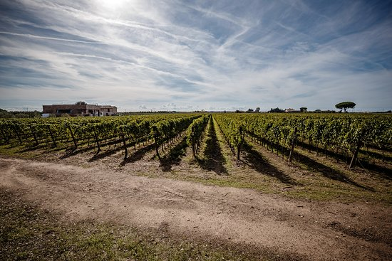Azienda Agricola Villanoviana