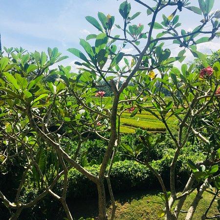 Maya Ubud Resort & Spa: photo4.jpg