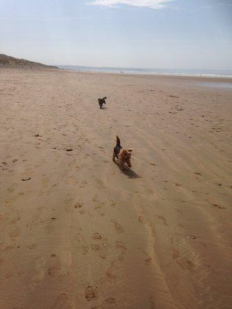 Saunton, UK: Woofies on Saunton Sands