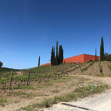Cantina Rocca di Frassinello