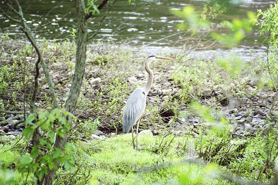 Central Falls, RI: See the wildlife found along the riverbanks