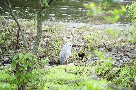 Central Falls, โรดไอแลนด์: See the wildlife found along the riverbanks