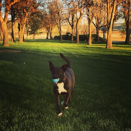 Huntington, OR: Great area for dogs
