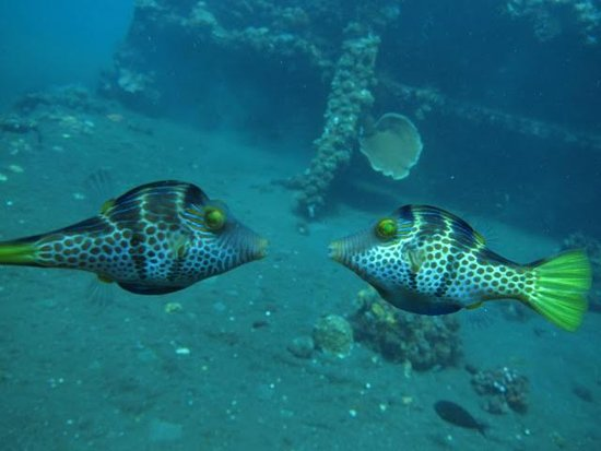 Blue Paradise Diving - Day Tours: 可愛い
