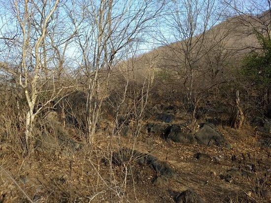 Sariska National Park: IMG_20180413_171641731_large.jpg