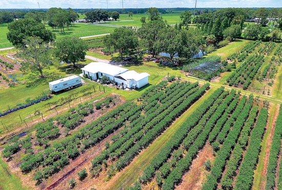 Shady Oak Farm