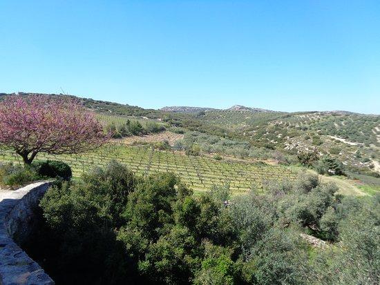 Private Peza Wine Tour: Vineyard