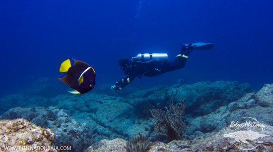 Loreto, México: Angel fish stealing the show!