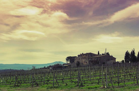 Franco Wine Tour Experience: View from the road on the tour