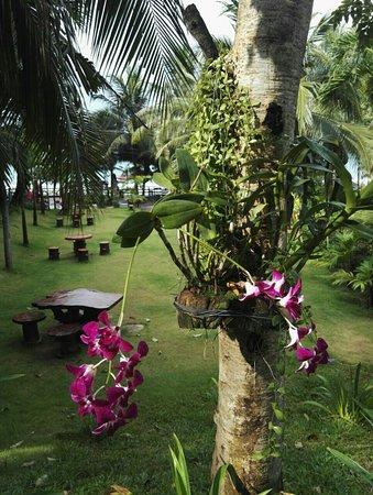 Ban Laem Mae Phim, Ταϊλάνδη: IMG-20180421-WA0006_large.jpg